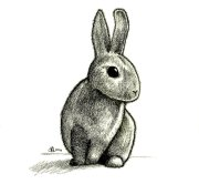 Rabbit_Drawing_by_aquarius_galuxy
